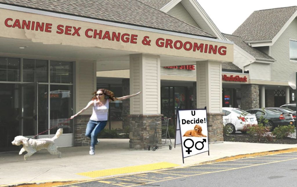 Lady's dog drags her to the Canine Sex Change store